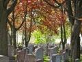 沧州风水较好的墓园,来这儿看看