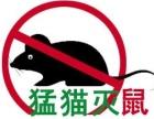专业灭老鼠灭蟑螂灭白蚁十年经验