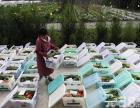 蔬菜配送机关单位食堂幼儿园北京全区配送