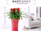 深圳坂田罗湖福田办公室绿植租赁 花卉租摆 及养护等