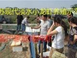 淡水小龙虾基地长年供小龙虾种,龙虾苗包技术,包成活全程专业指导