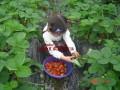 上海农家乐一日游 有机草莓采摘 钓鱼 住宿 海边