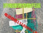 济南 烟台 青岛始发汽车 火车飞机托运宠物狗狗猫咪