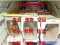 青岛专注宠物托运公司