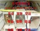 青岛代理宠物托运公司青岛代理宠物空运公司