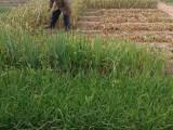 宝坻潮白河农家院