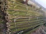 古冶杉木杆垫木批发