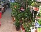 鄂州新房净化空气绿植 开业花卉租售可向私人出租