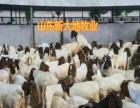 全国优质种苗 黑山羊 波尔山羊 黄牛 西门塔尔牛