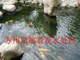 日本锦鲤批发