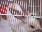 可爱兔子带笼子一起出售