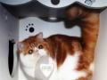 伊诺——震撼地球 震撼登场 MARIE加菲猫