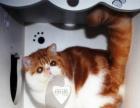 伊诺震撼地球 震撼登场 MARIE加菲猫