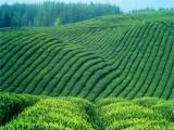 长和茶叶 长和茶叶加盟招商