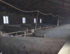 敦化市东吉祥村 厂房 14500平米