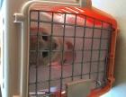 宠物航空托运/宠物托运公司/宠物检疫证代办