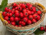 映山红食品山楂果品-您上好的选择,山楂果品批发价格