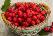 映山红食品厂-知名的山楂果品批发商——云南山楂果品