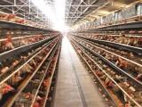 鸡饲料添加剂价格 优农康微生态饲料添加剂