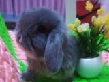 夏日狂甩宠物兔