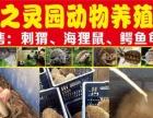 【中国最大刺猬养殖场】加盟官网/加盟费用/项目详情