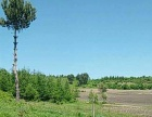 出租桦南土地 含鱼池 果树