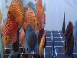 杭州出售观赏鱼