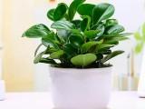 番禺科技园租花 番禺科技园绿植租赁 科技园植物销售