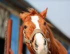 上海马术学习 骑马 会员价分享
