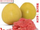 金秋佳节,福建福州市真之恋红心蜜柚是你较佳的选择欢迎来厂