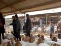 嘉联牧业 嘉联牧业加盟招商
