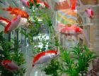 昆明鱼缸养护 风水鱼缸清洗 鱼缸维修 鱼缸布局造景设计