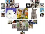 北京宣武出售纯种斗牛犬宠物狗狗幼犬