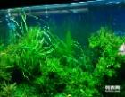 宜兴红星美凯龙索浦水族销售各种水草,小鱼