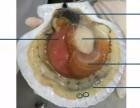 吃扇貝的注意事項:夏邦有鮮生鮮商城溫馨提示