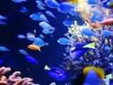 淡海水鱼缸维护消毒清洗鱼缸维修,造景鱼缸