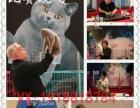 火爆出售温顺宠物小猫,美短英短蓝猫加菲布偶,包健康