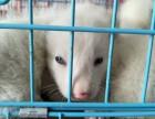 北京宠物狐狸多少一只