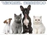 惠州惠城宠物托运24小时接送