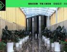 格林部落专业绿色花卉绿植物租赁批发专业设计定期养护