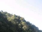 安徽省黄山500亩林地出租