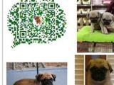 犬舍直售纯种巴哥犬幼犬上门驱虫疫苗已做