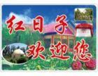 南山深圳湾搬家公司,新家乔迁21523466