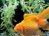 清洗鱼缸鱼缸维护海水鱼养护定做鱼缸观赏鱼养护