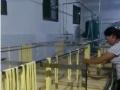 大型腐竹机 手工豆油皮机 豆制品设备