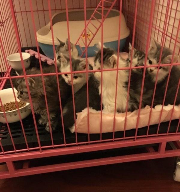 家庭猫舍全部现货