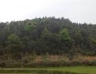 永福 苏桥附近有 土地 400亩