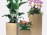 專業綠植租擺綠化養護辦公室植物租賃花卉租賃