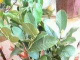 办公室、室内户外大小盆栽、果树