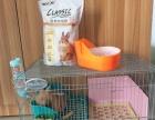 兔兔笼子也可以放狗狗用 三角厕所 纽安吉1kg兔粮